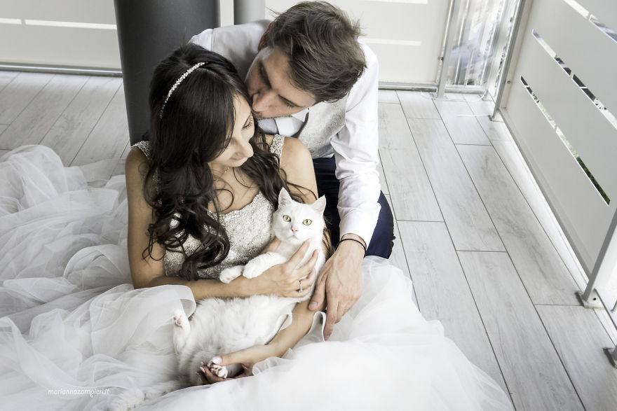 chụp ảnh cưới cùng thú cưng