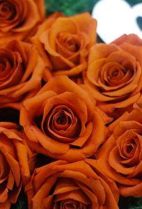 Lọ thuỷ tinh và hoa chuyên Dịch vụ khác tại TP Hồ Chí Minh - Marry.vn