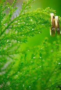 Bazan Studio chuyên Chụp ảnh cưới tại Đăk Lăk - Marry.vn