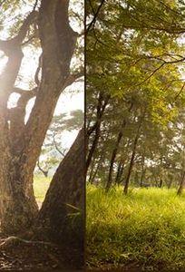 Áo Cưới Nguyễn Hưng CT chuyên Chụp ảnh cưới tại Cần Thơ - Marry.vn