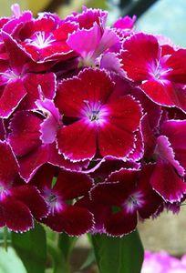 Violet Flower chuyên Hoa cưới tại Thành phố Hải Phòng - Marry.vn