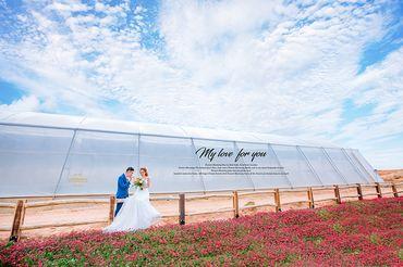 Ảnh cưới đẹp tại Đà Lạt - Trương Tịnh Wedding - Hình 13