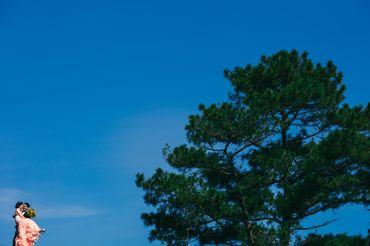 Đà Lạt, Nha Trang - [308]Photo - Hình 6