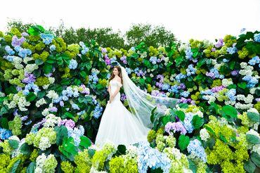 Chụp ảnh cưới Phim trường - Big Eyes Studio - Hình 13