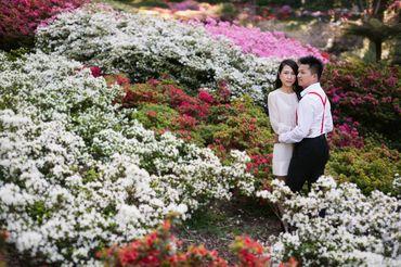 Gói chụp Phú Mỹ Hưng toàn diện - Hoa Ta Photo (wArtaPhoto) - Hình 1