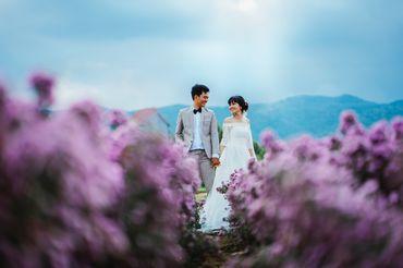 Sea Package (Hồ Cốc - Vũng Tàu / Phan Thiết - Cocobeach Camp / Vĩnh Hy) - Tony Wedding - Hình 10