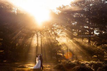 GÓI CHỤP ẢNH NGOẠI CẢNH ĐÀ LẠT - Rin Wedding Đà Lạt - Hình 6