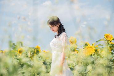 Album cưới lãng mạn tại Đà Lạt Tháng 12 khuyến mãi còn 10,800,000 - Jolie Holie - Hình 4