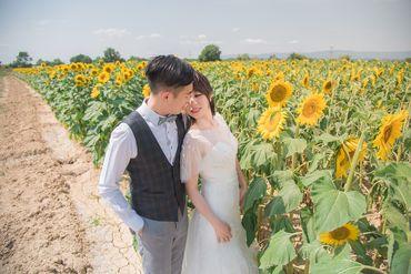 Album cưới lãng mạn tại Đà Lạt Tháng 12 khuyến mãi còn 10,800,000 - Jolie Holie - Hình 8