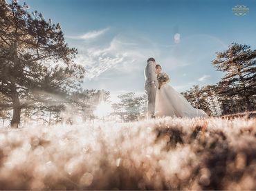 Chụp Album Cưới Đà Lạt chỉ với 12.500.000đ - Trương Tịnh Wedding - Hình 17