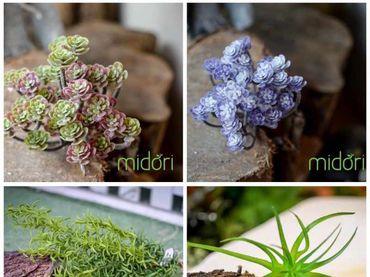 Hoa vải cao cấp - Midori Shop - Phụ kiện trang trí ngành cưới - Hình 19