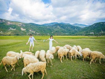 Gói chụp Hang Rái, Resort Sao Biển, Trại cừu Phan Rang Ninh Thuận - Vincente Studio - Hình 7