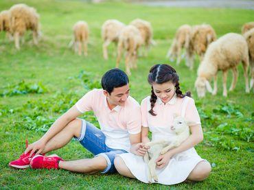 Gói chụp Hang Rái, Resort Sao Biển, Trại cừu Phan Rang Ninh Thuận - Vincente Studio - Hình 11