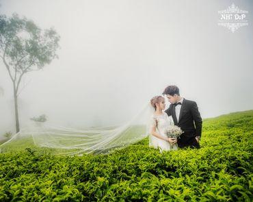 Album Đà Lạt - Nhi Dip Bridal - Hình 4